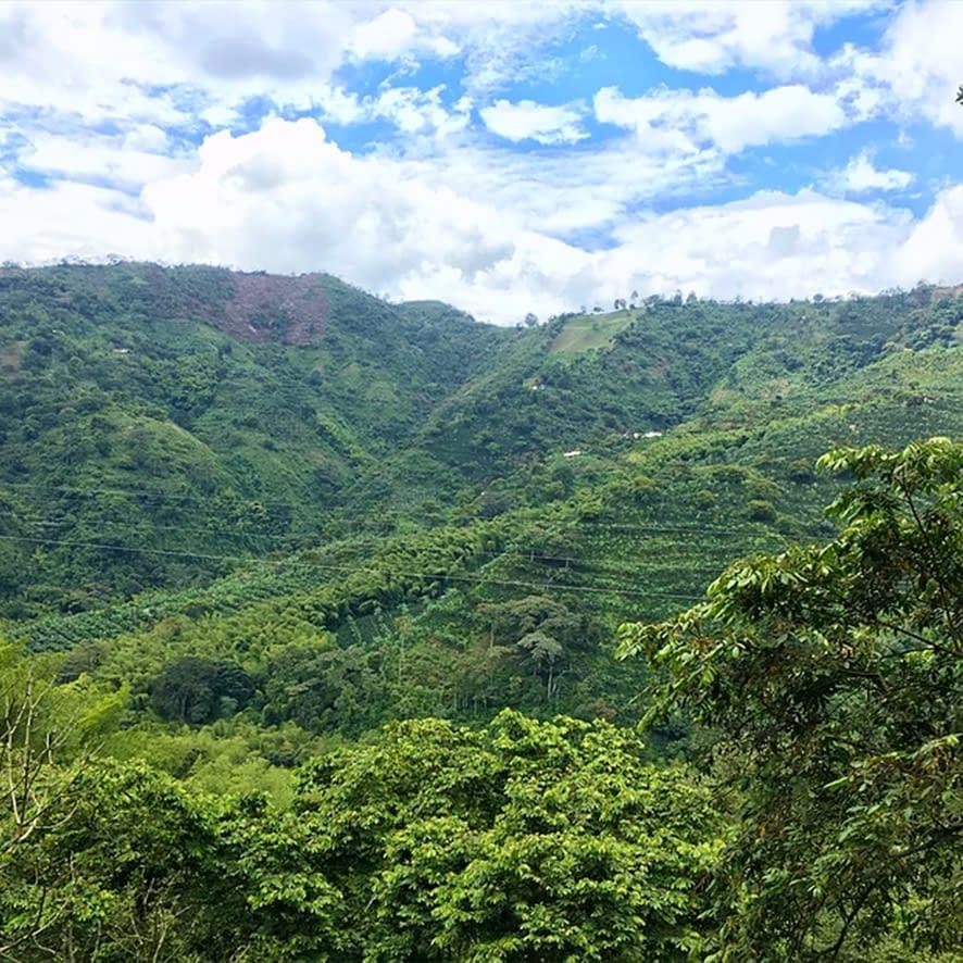 Colombian Exotic Coffee farm