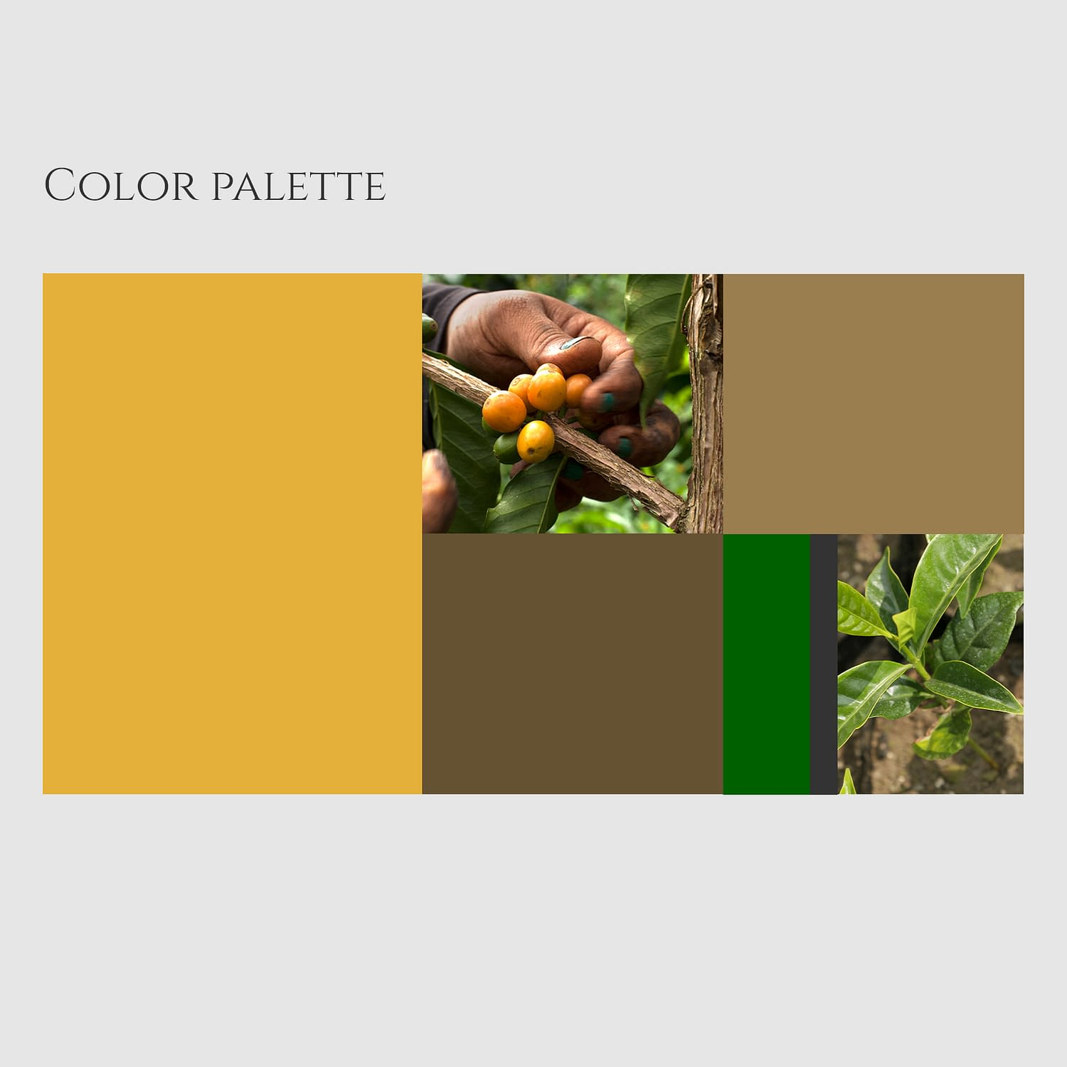 Colombian Exotic Coffee - color palette
